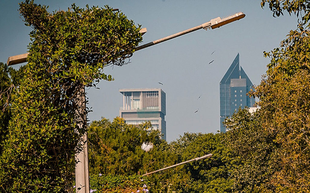 View of vultures flying from a distant - Mumbai