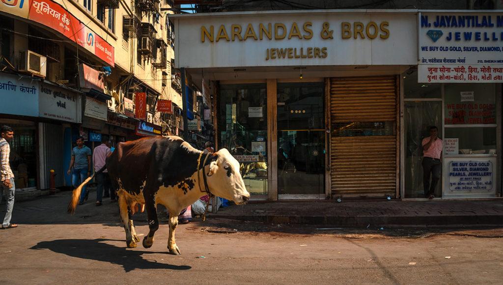 A cow walking on a street - Mumbai