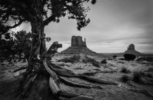 View of the Monument Valley beside a tree