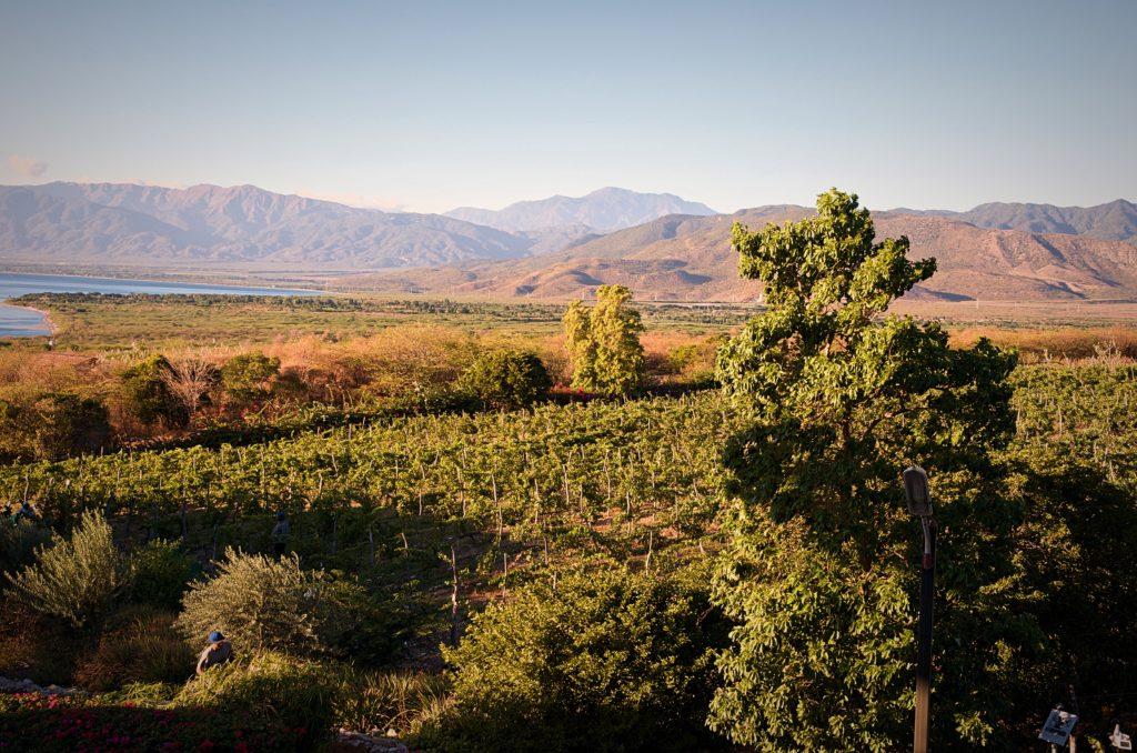 OcoaBay Vineyard