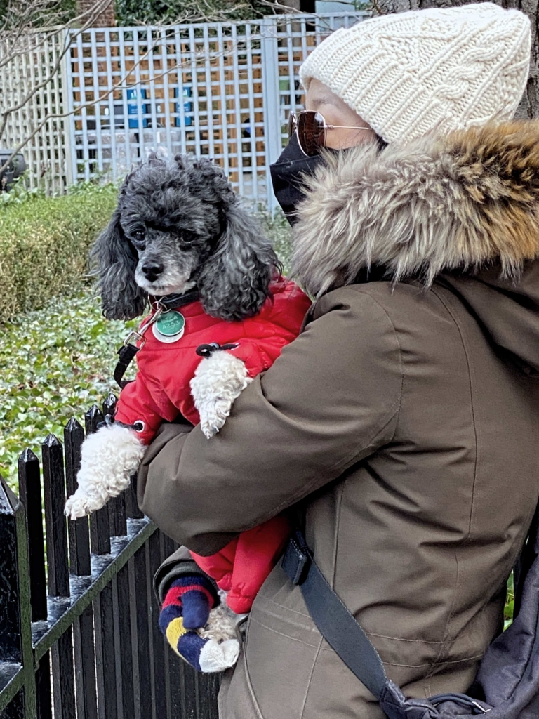 Woman with Bundled Dog Central Park Zoo