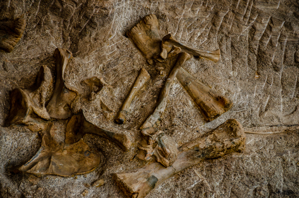 Dinosaur National Monument Fossil Wall